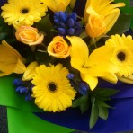 yellow-and-blue-beautiful flowers